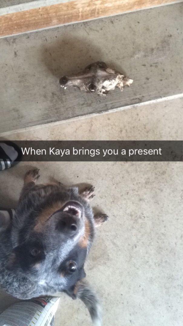 My Dog Gets So Excited When She Brings Me A Gift