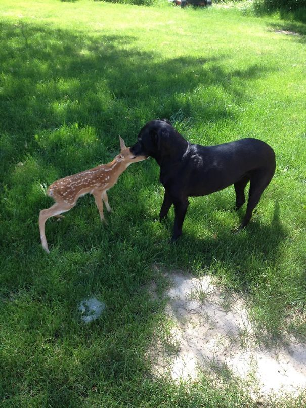 So My Dog Brought Home A Fawn The Other Day