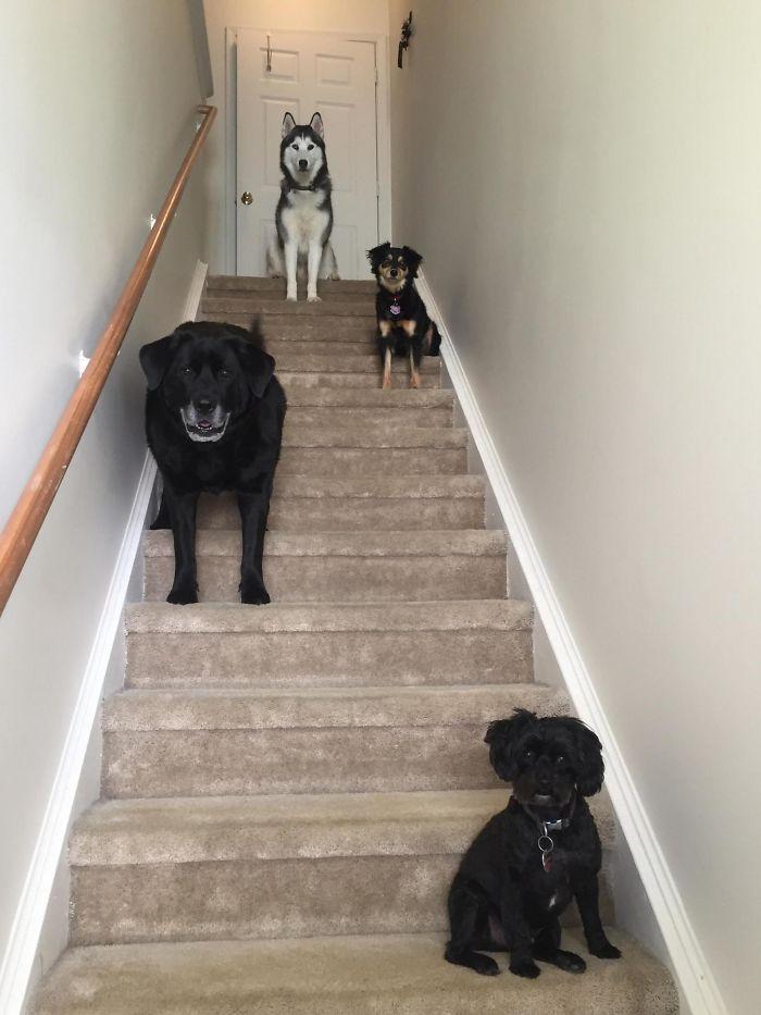 Mis perros van a sacar su primer disco