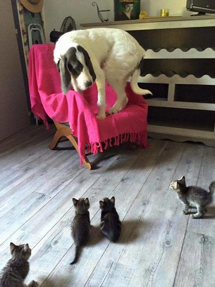 Le dan miedo los gatitos