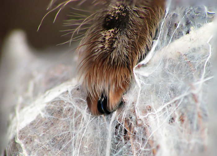 Spider Paws