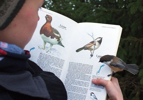 This Bird Landed On The Page About Itself