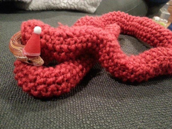 Mi suegra le ha tejido un jersey a nuestra serpiente