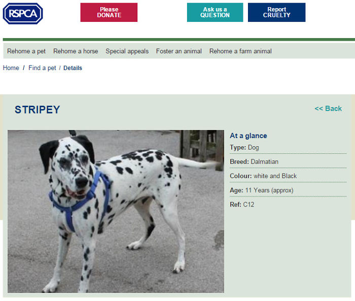 Browsing Dogs For Adoption. I Think We've Found The One