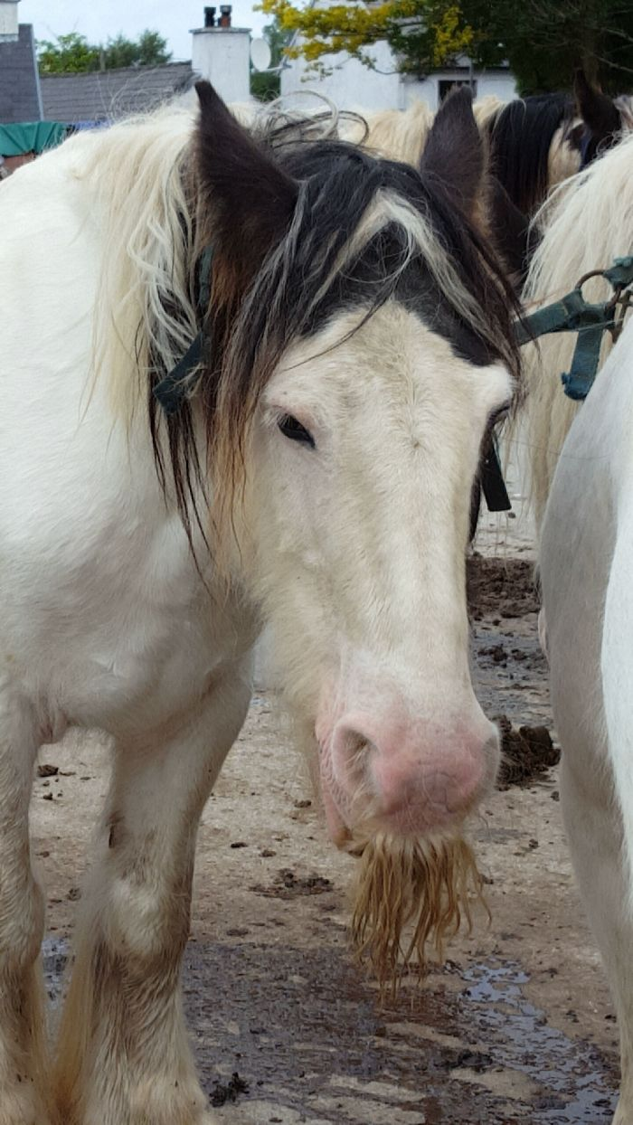 Horse With A Mustache
