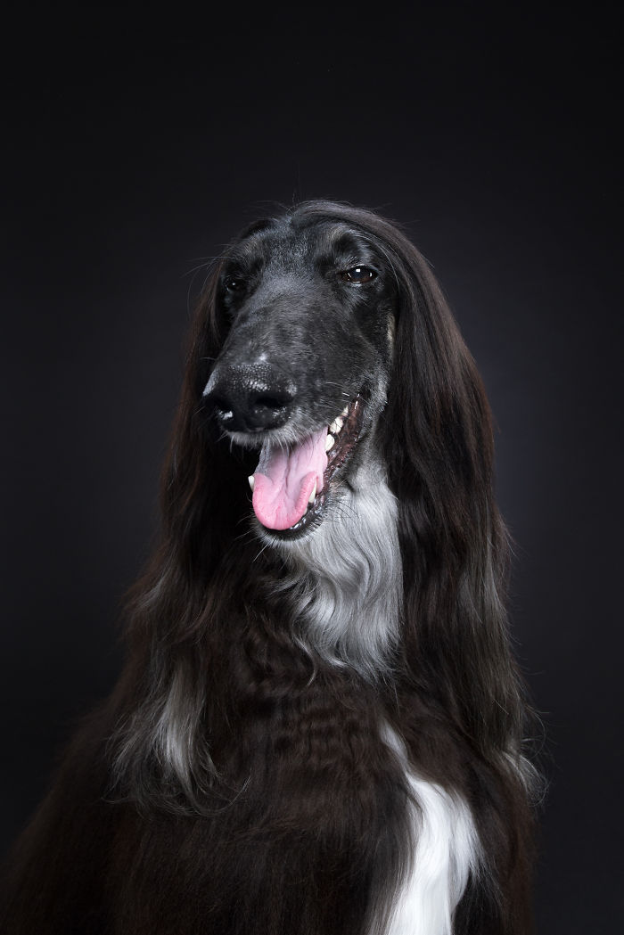 Family Photographers Duo Reveals Human-like Dog Personalities Through The Series Of Funny Portraits