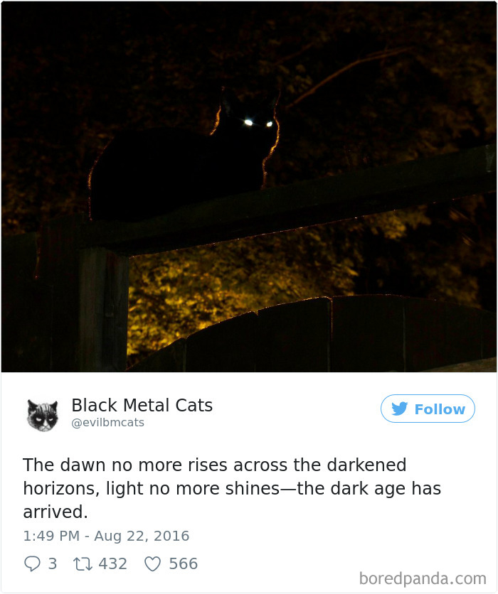 Lyric black lyrics : Twitter Account Pairs Cat Pics With Metal Lyrics And It's Just ...