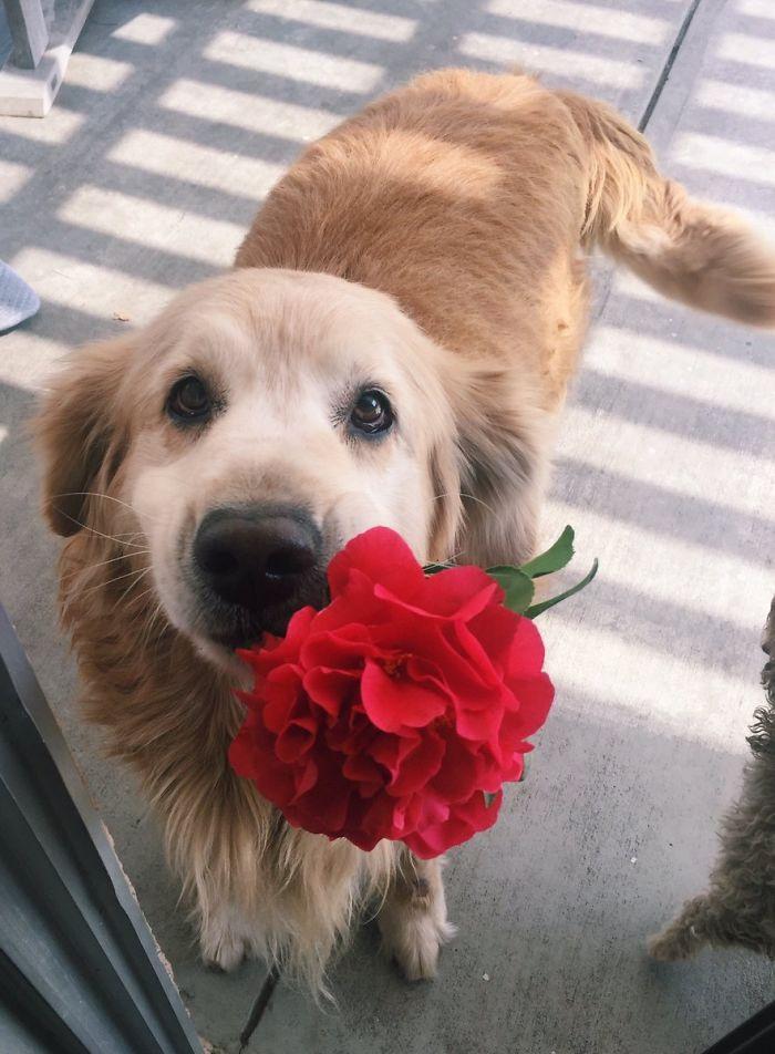 Mi perro me ha traido una flor