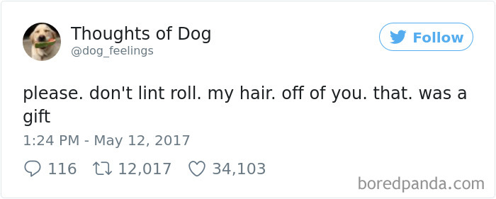 Dog Thoughts