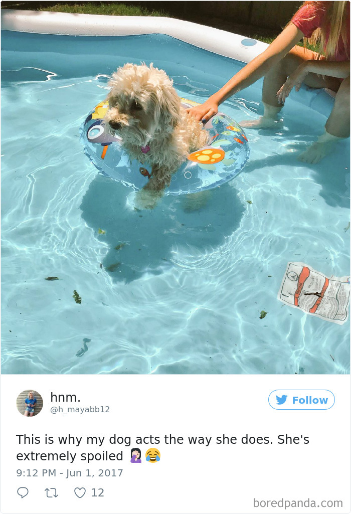 Xx+ Spoiled Dogs That Live Better Than You