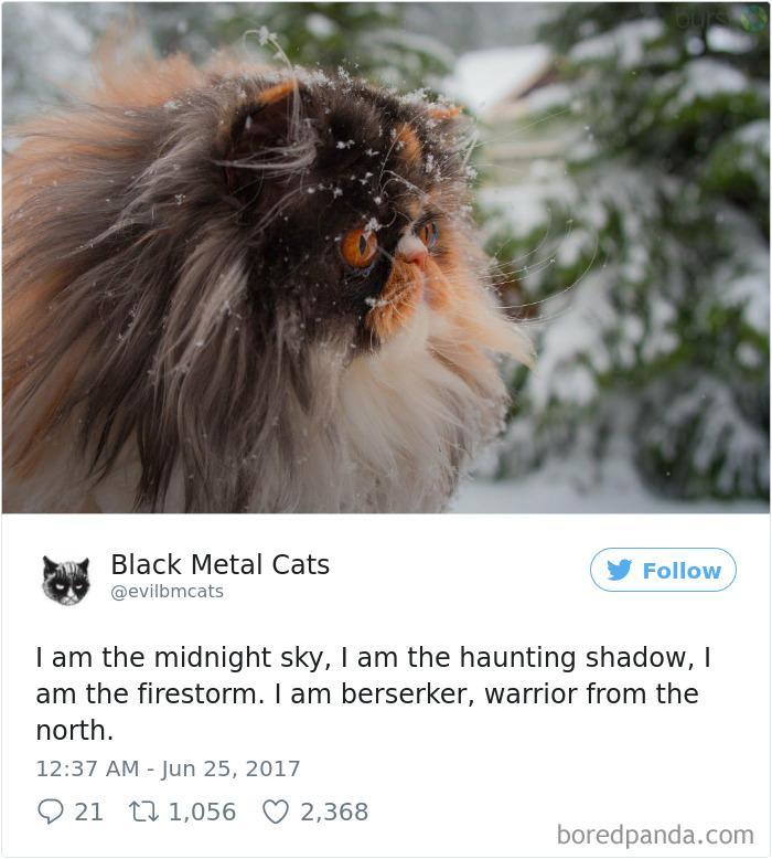 Black-metal-cats-lyrics-tweets