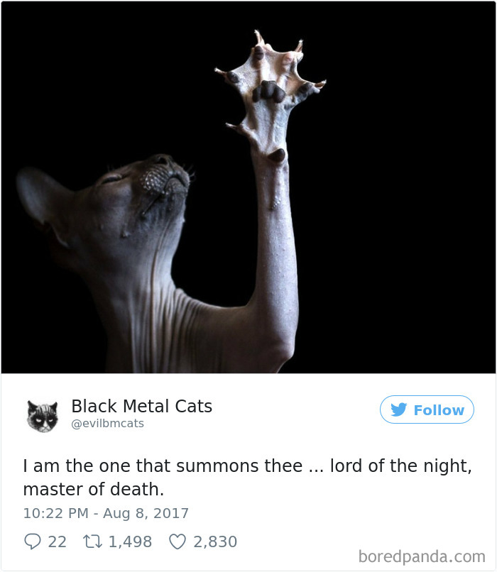 Twitter Account Pairs Cat Pics With Metal Lyrics And Its Just