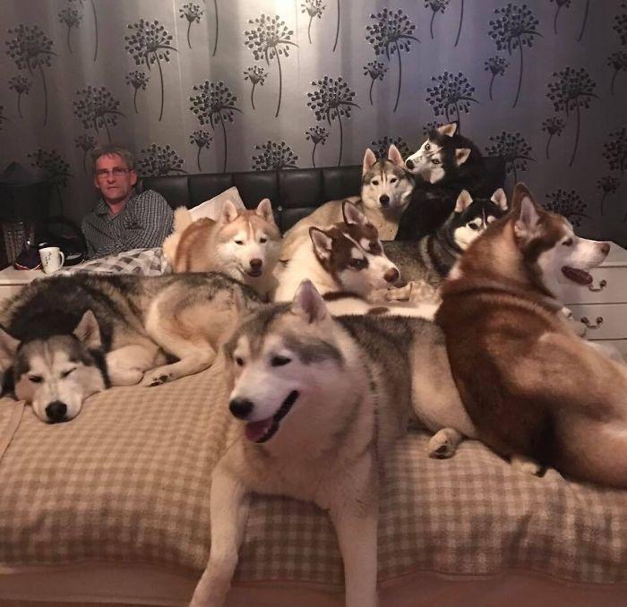 Mis tíos tienen más de 20 huskies y tienen este problema todas las noches