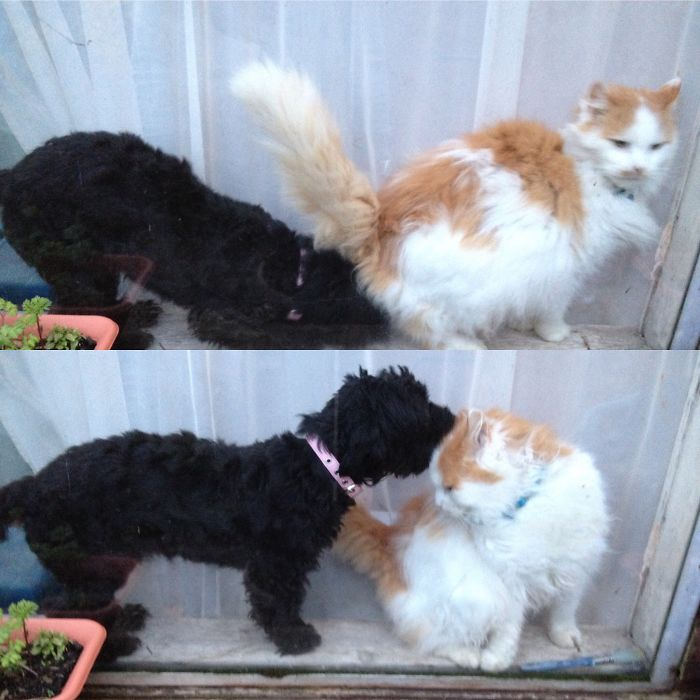(1) Umm No Indie, That's Not How We Greet Cats! (2) Much Better