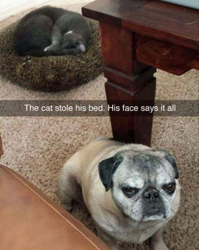 His Face Says It All