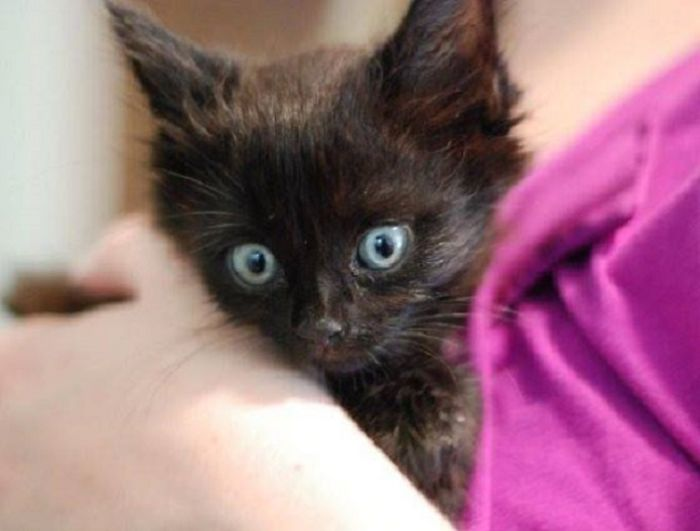 Quadriplegic Rescued Kitten Returns To Walk After 5 Years