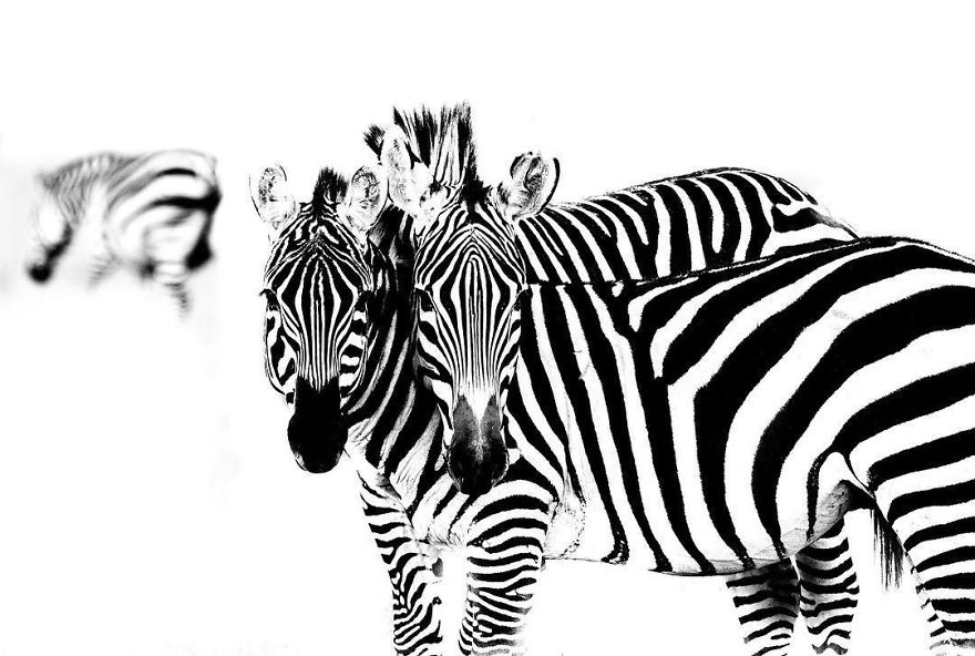 Wildlife-photography-robert-irwin