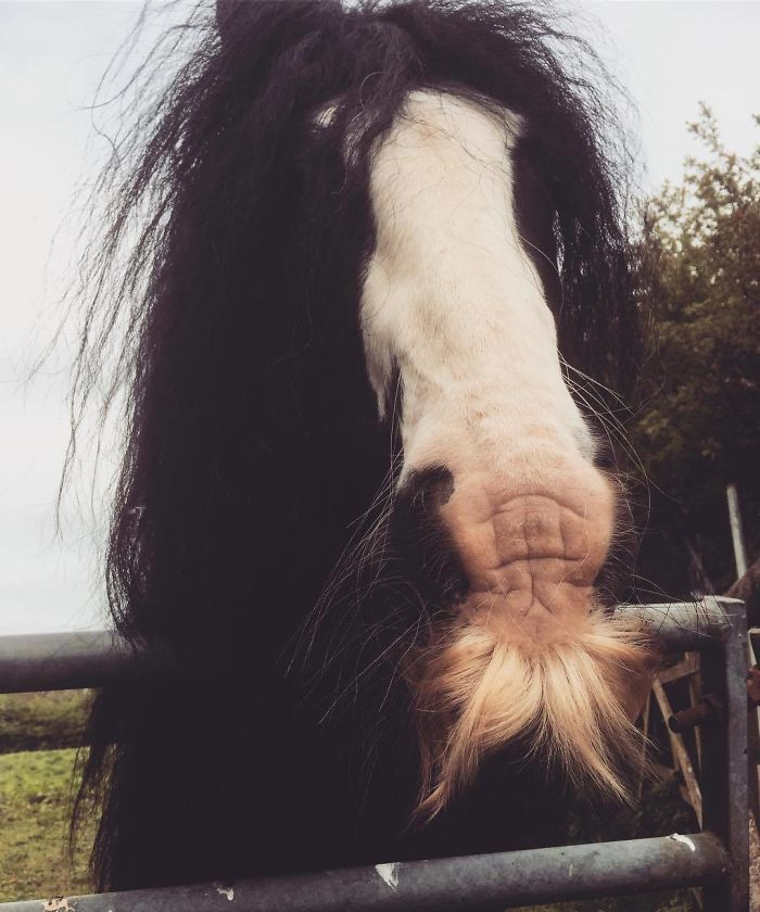 I Am Loving The Moustache On This Pony