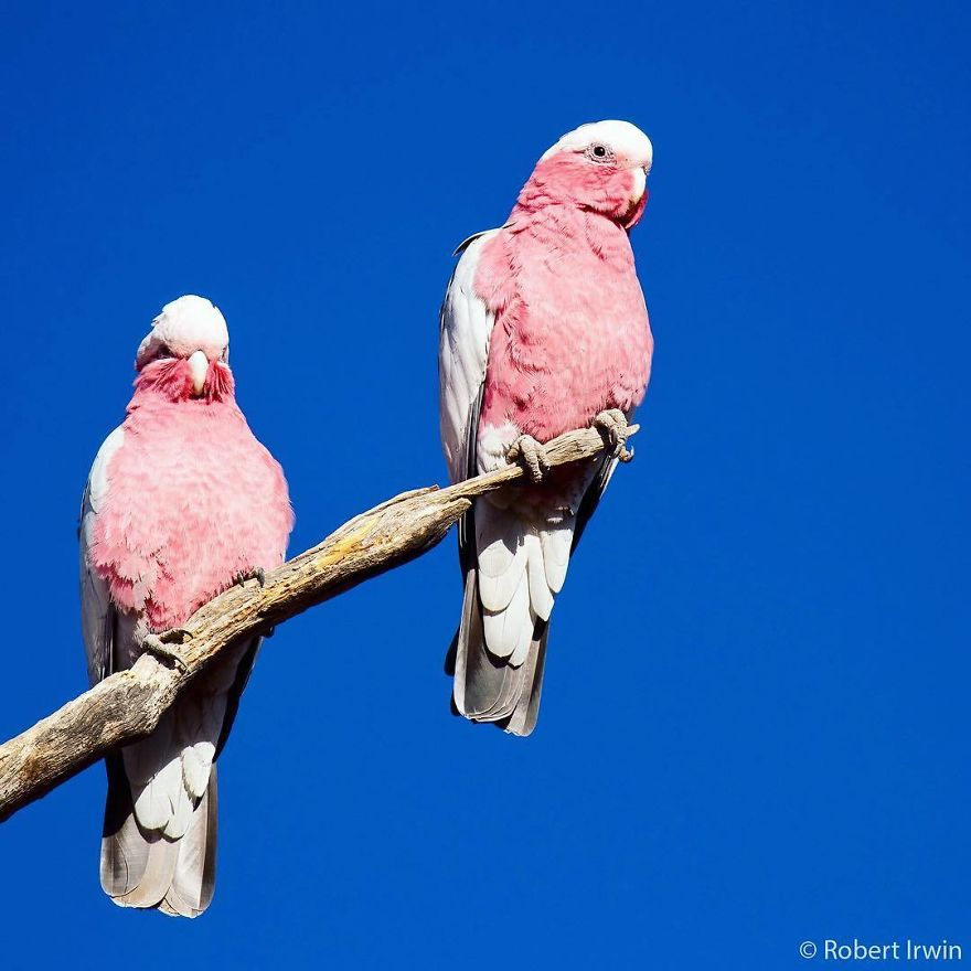 Wildlife-photography-robert-irwin
