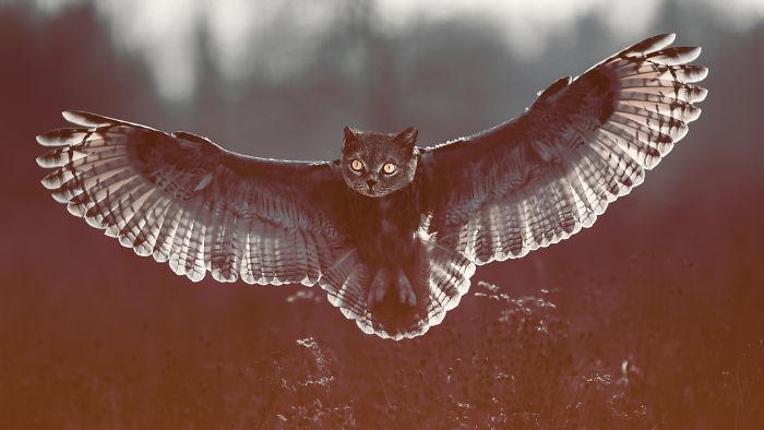 Dramajestic Catowl