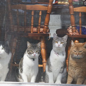 When I Had 4 Cats, The Easiest Way To Catch Them In A Photo Was To Go Stand In Front Of The Patio Door