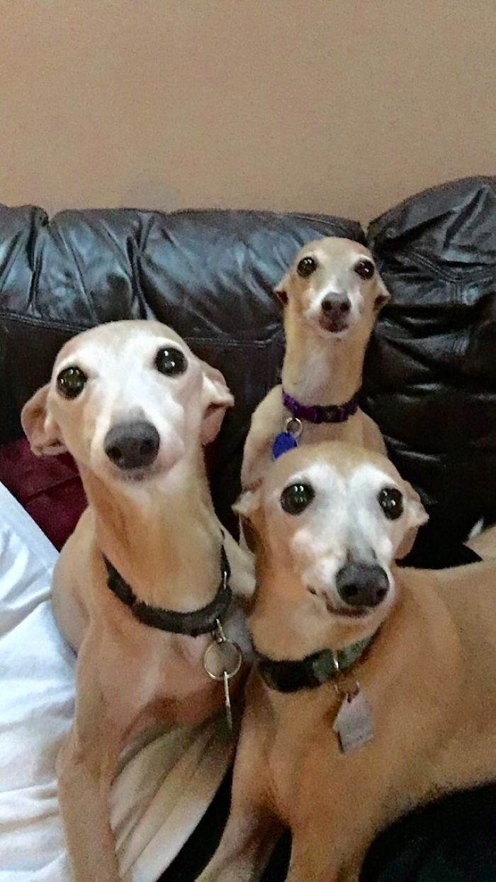 """This Was Their Faces After I Walked In The Room And Yelled, """"ok, Who Did It?"""""""