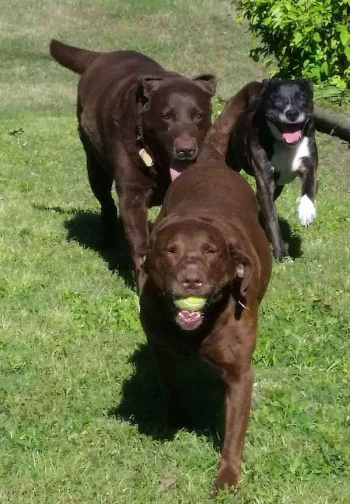One Of These Is Not Like The Others, Only Thing Is She Doesn't Know She's Not A Retriever.