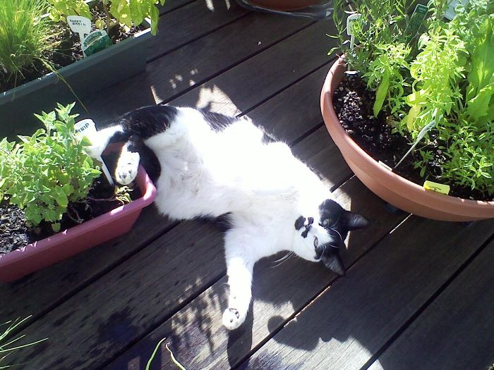 Fifi Got Into The Catnip And She Got Stoned!