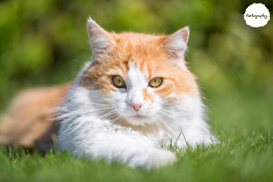 7 Years After Major Nz Earthquake, The 'Unknown Cat' I Wrote About In Quake Cats Book Is Found Alive & Well, Fully Recovered From Horrific Injuries. This Is His Story
