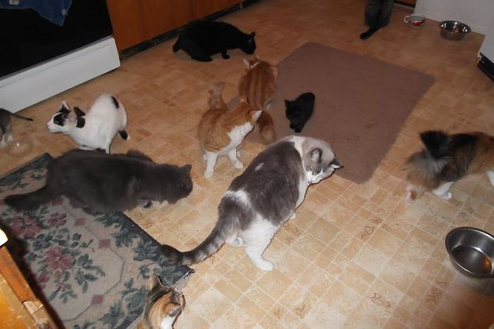 11 Of My 15 Waiting For Their Canned Food Treat. No Idea Where The Dog Is