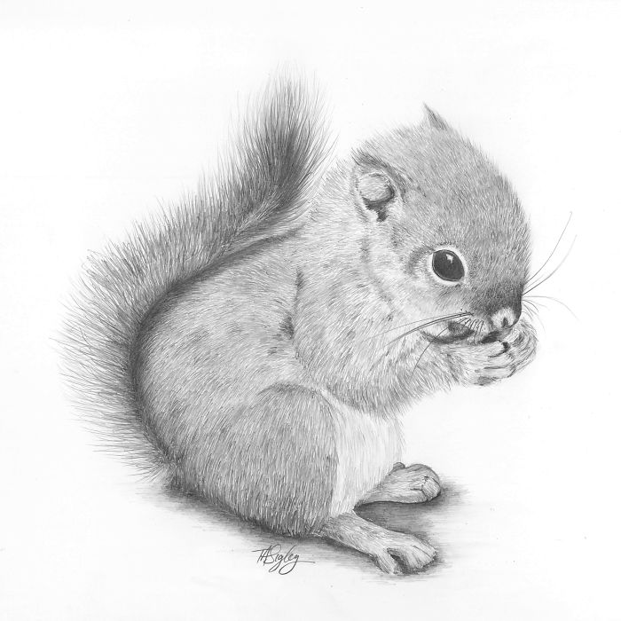 I Draw Animals With A Mechanical Pencil