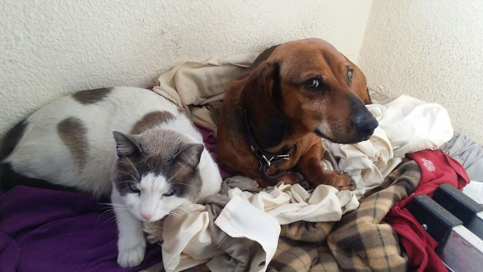 Max The Cat Loves To Stay With His Brother, Brownie.