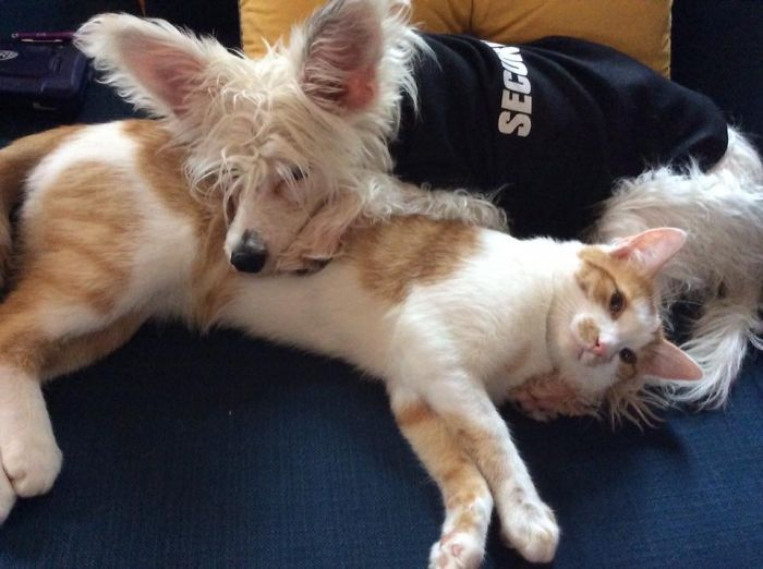 Ziggy And Lucky – Morning Cuddles