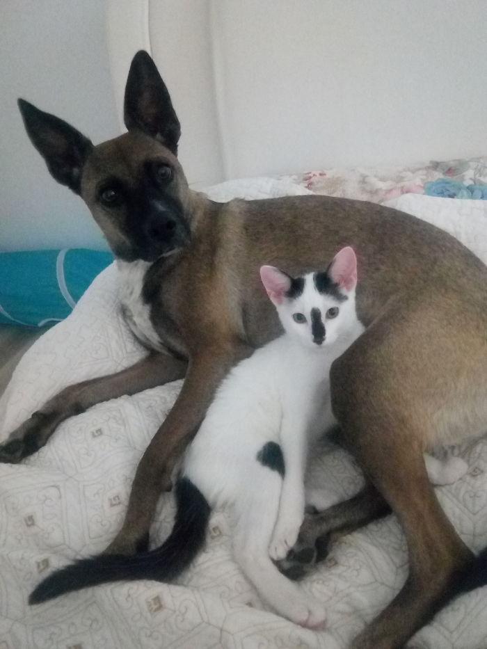 Mila & Odi