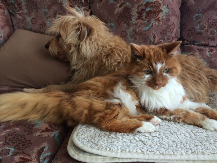 Oliver Fox And Wee Sally