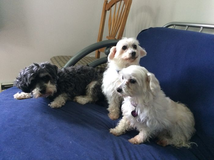 All Rescues. Me Babies: Casper, Lexie And Lilly