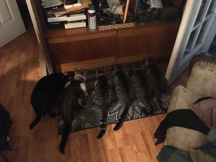 Feeding Time! Pippin, Zephyr, Trixie, Commando Charlie, Rambo & Louie