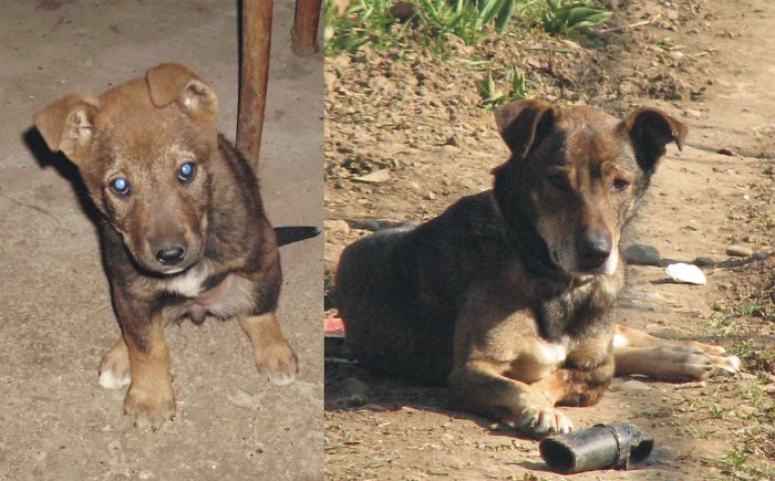 Our 3-Legged Doggie On The Day We Took Her Home And Today, 8 Years Later.