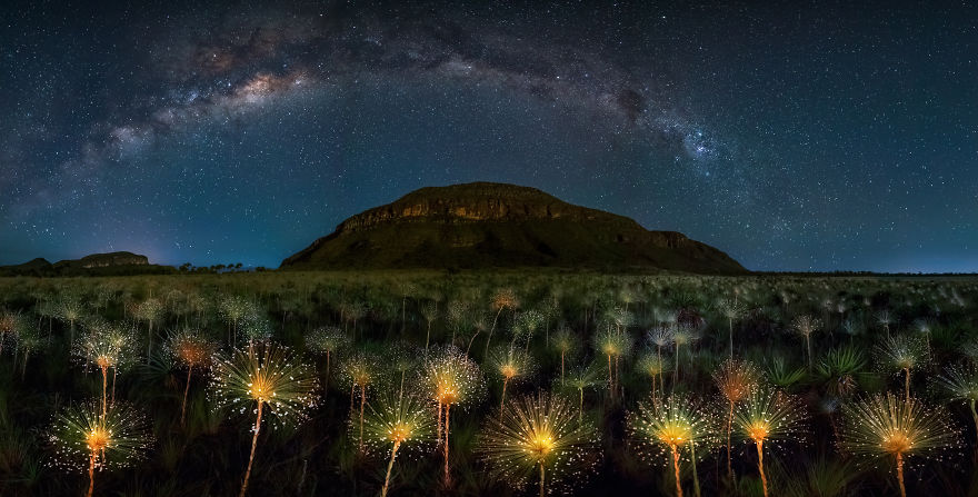 Nightscape 1st Prize | Papalanthus Wildflower And Milky Way, Brazil - Mario Cabral / Pna