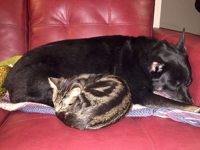 Rudy (dog) And His Newest Kitty, Oswald – Friends From Day One!