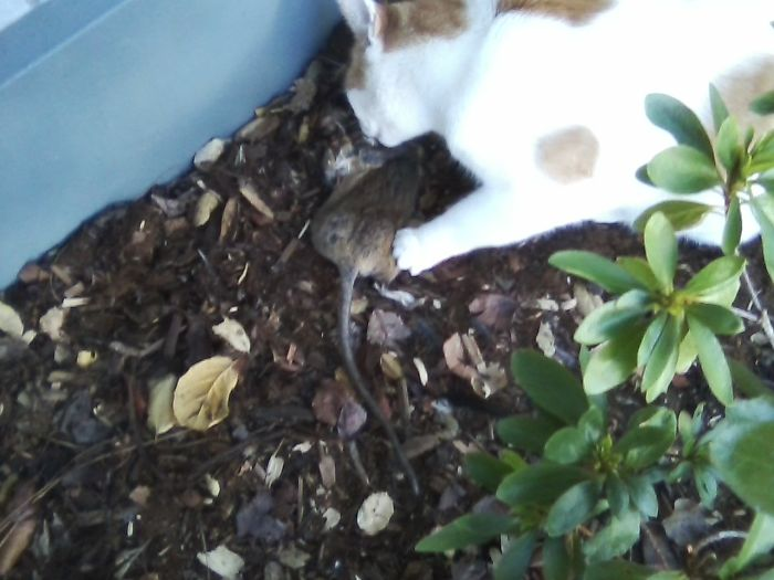 Guess I Should Cancel My Pest Control Service……