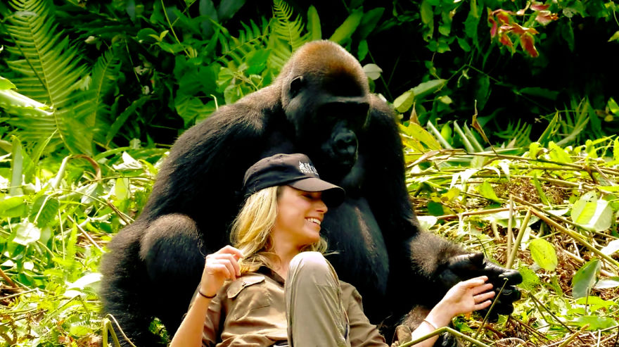 This Man Took His Wife To See Wild Gorillas And What Happened Is Amazing