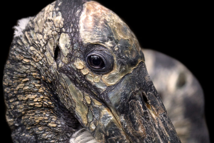 Through The Lens Of An Alabama Wildlife Photographer