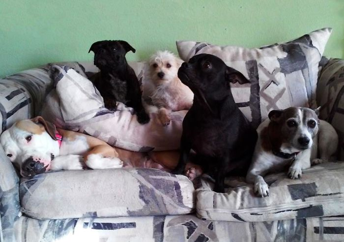 """My Pit Bull, Noodle Was Taking A Nap… Her """"brother And Sisters"""" Came To Join Her. This Is The Only Picture I Have With All Of Them Together. The Smile On Noodle's Face Is Priceless!"""