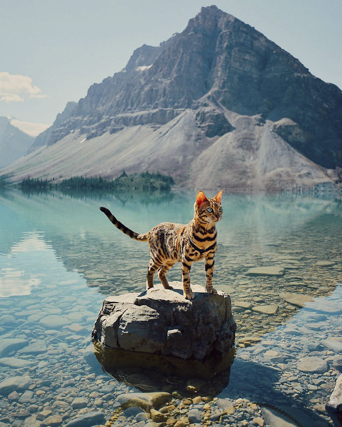 Adventures-suki-the-cat-canada
