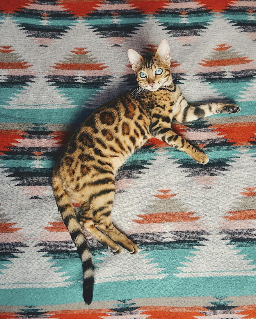 Adventures-suki-the-cat-canada