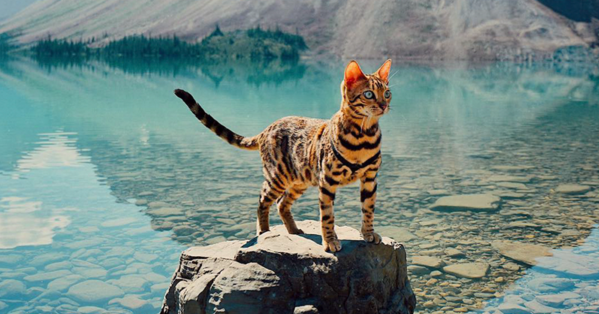 Meet Suki, The Traveling Cat Who's Living A Better Life Than You