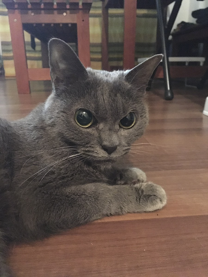 The World's Angriest Cat Who Has Been In Shelter For Over 1 Year Now, And Her Face Says It All