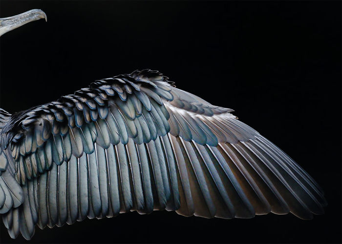 Wing Formation By Tom Hines, Uk. Gold Award Winner In The Attention To Detail Category