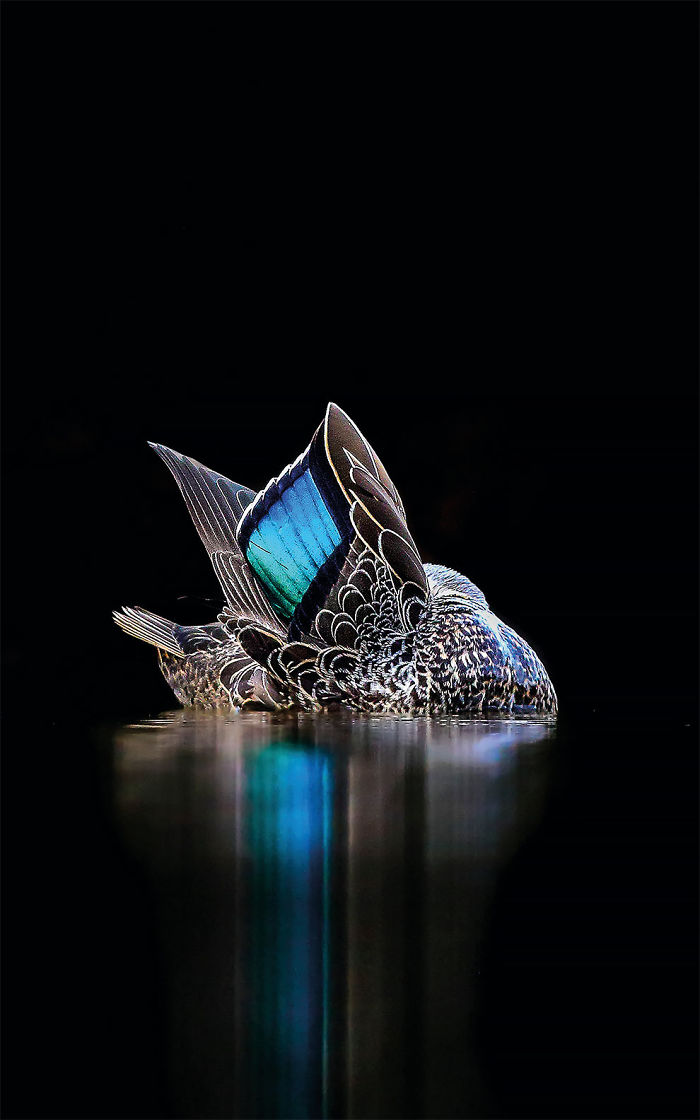 El Espéculo Por Georgina Steytler. Australia. Ganadora Del Oro En La Categoría Imágenes Creativas